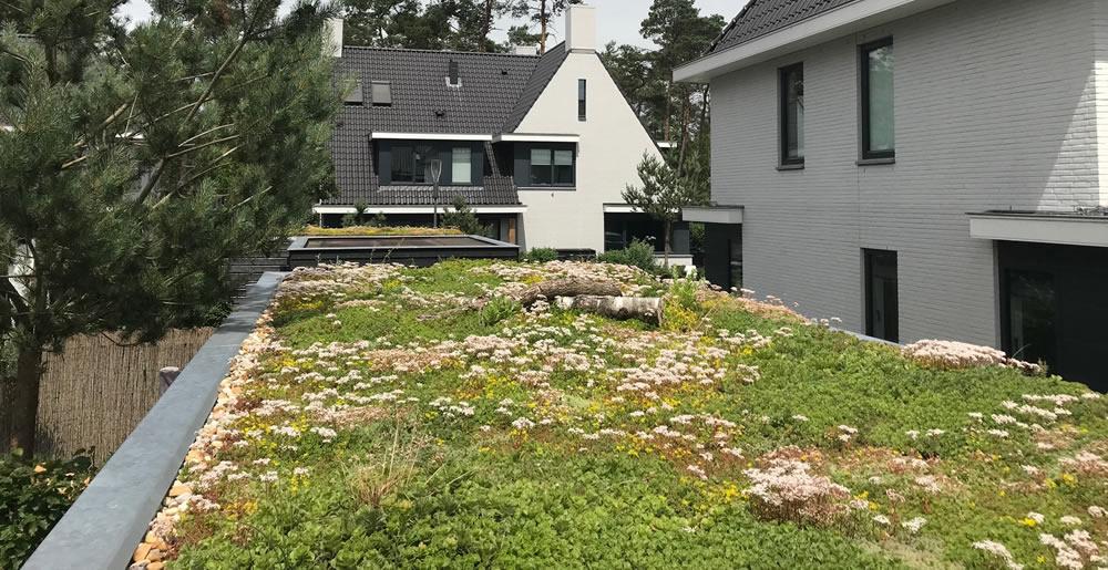 Onderhoudgroendak • Gras en Groen Winkel