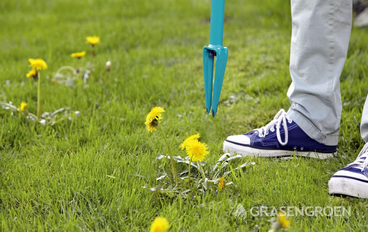 Gazononkruid2 • Gras en Groen Winkel