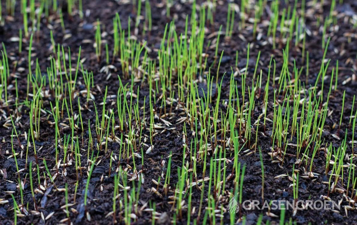 Gazonbijzaaien2 • Gras en Groen Winkel
