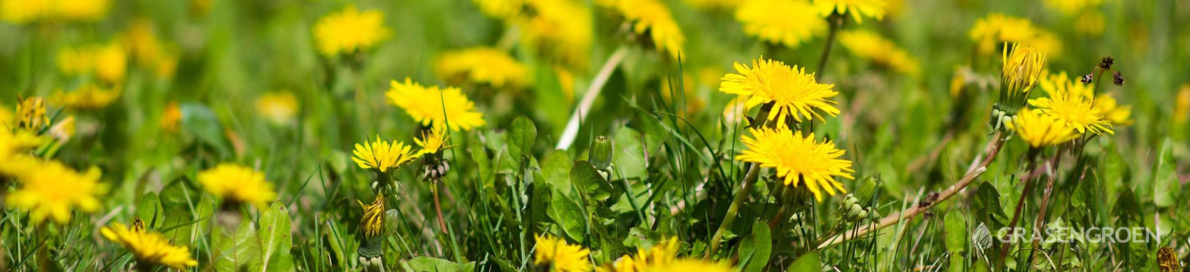 Onkruid • Gras en Groen Winkel