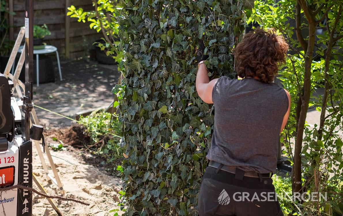 Zelfkantenklaarhaagaanplanten2 • Gras en Groen Winkel