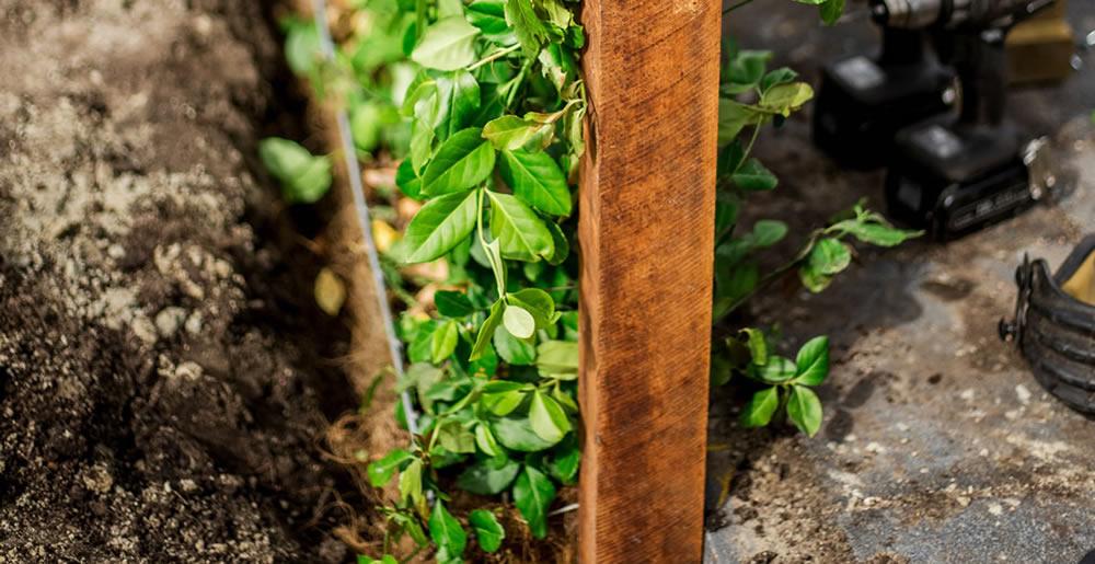 Zelfkantklaarhaagaanplanten • Gras en Groen Winkel