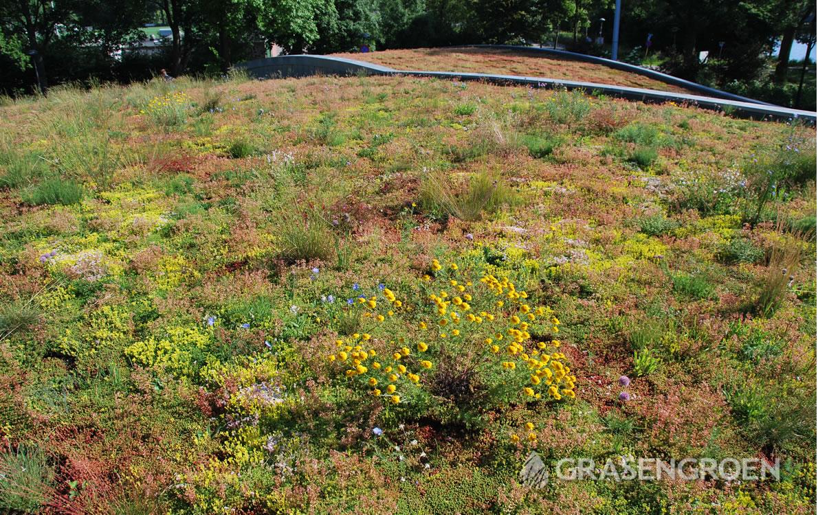 Keuzegroendak2 • Gras en Groen Winkel