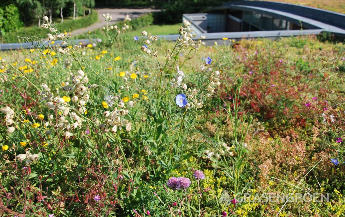 Keuzegroendak3 • Gras en Groen Winkel