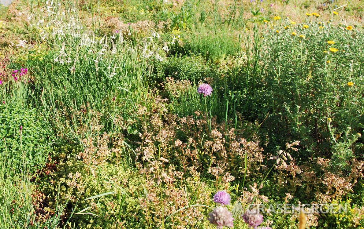 Groendakonderhouden1 • Gras en Groen Winkel
