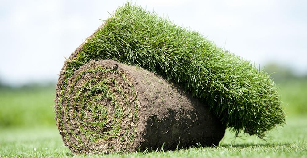 Graszoden • Gras en Groen Winkel