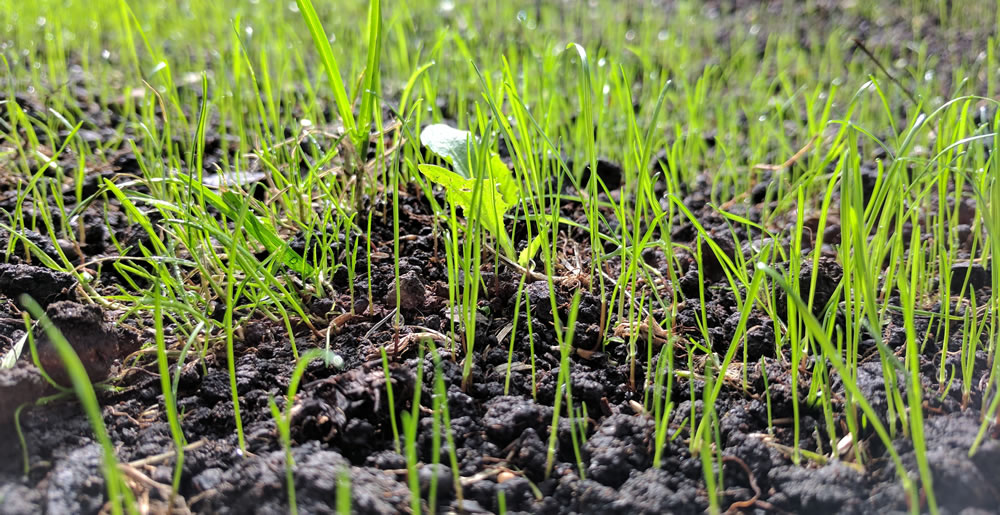 Graszaaien • Gras en Groen Winkel