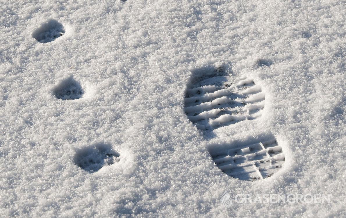 Sneeuwschimmel3 • Gras en Groen Winkel