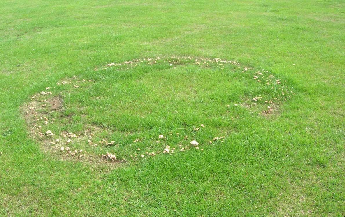 Paddenstoelengazon3 • Gras en Groen Winkel