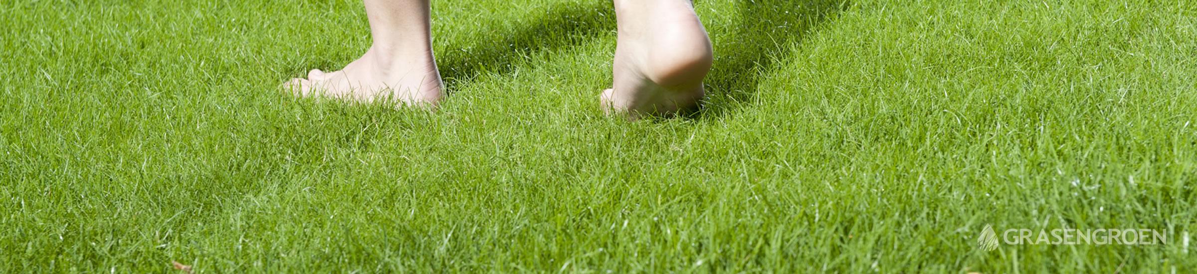 Gazon • Gras en Groen Winkel