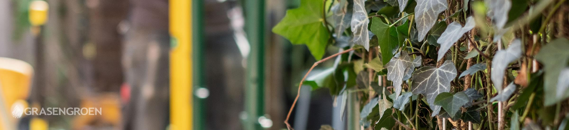 Zelfkantenklaarhaagaanplanten • Gras en Groen Winkel