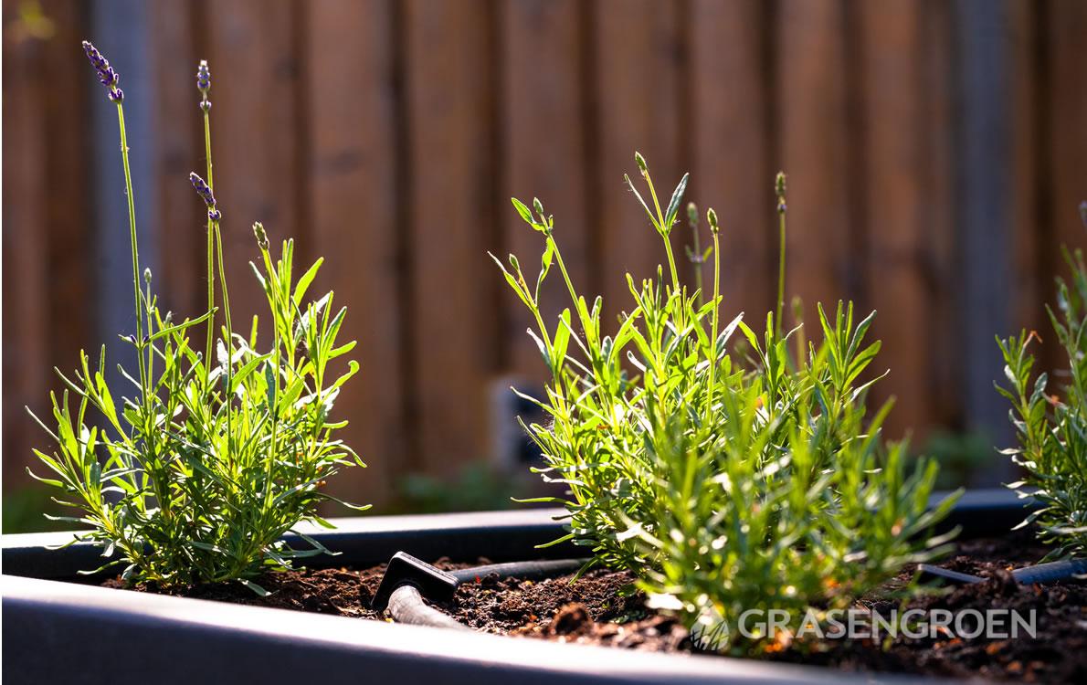 Tuinplanten6 • Gras en Groen Winkel