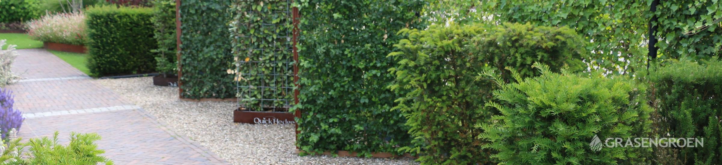 Kantklaarhaagkiezen • Gras en Groen Winkel