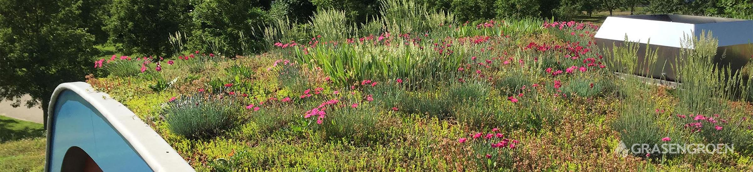 Adviessedumdak • Gras en Groen Winkel