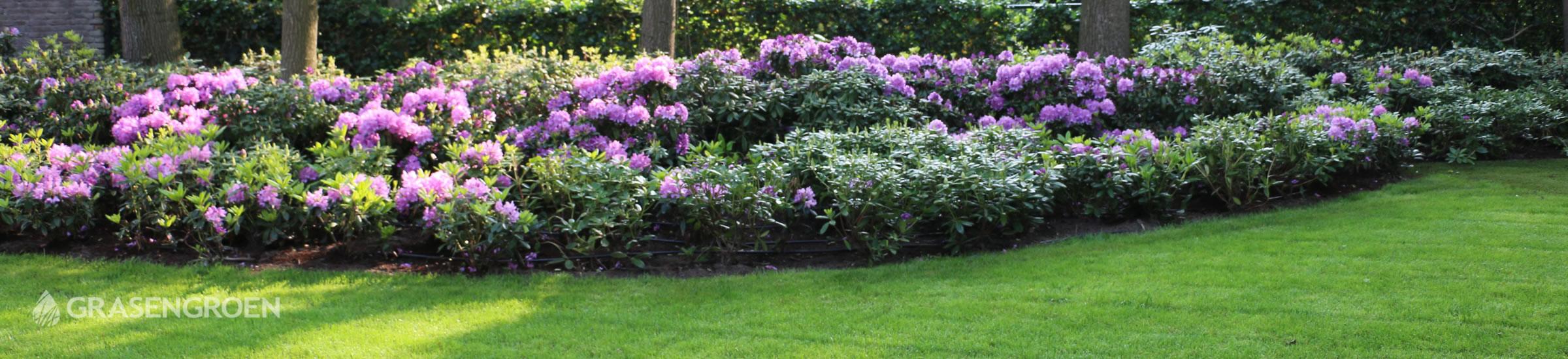 Bostuin • Gras en Groen Winkel
