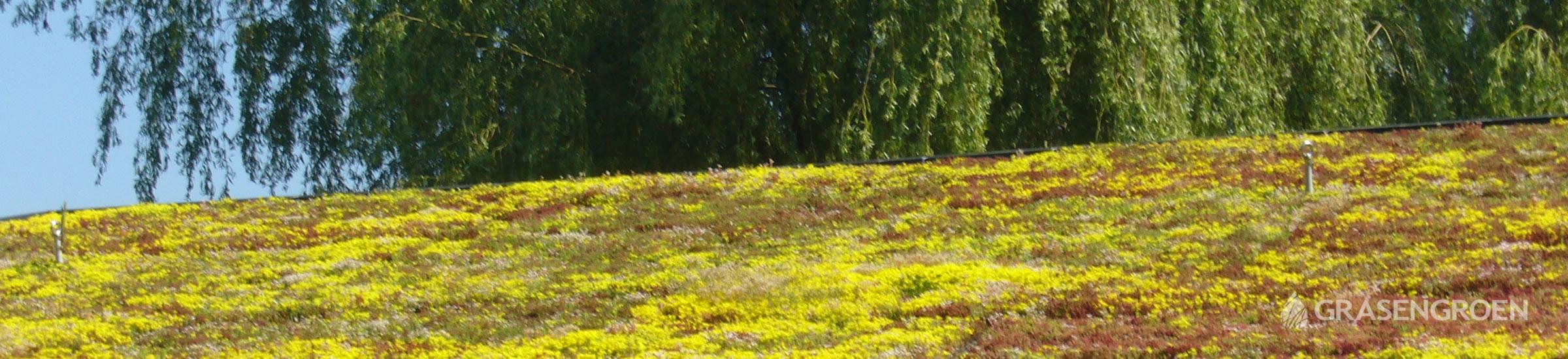 Groendakonderhouden • Gras en Groen Winkel