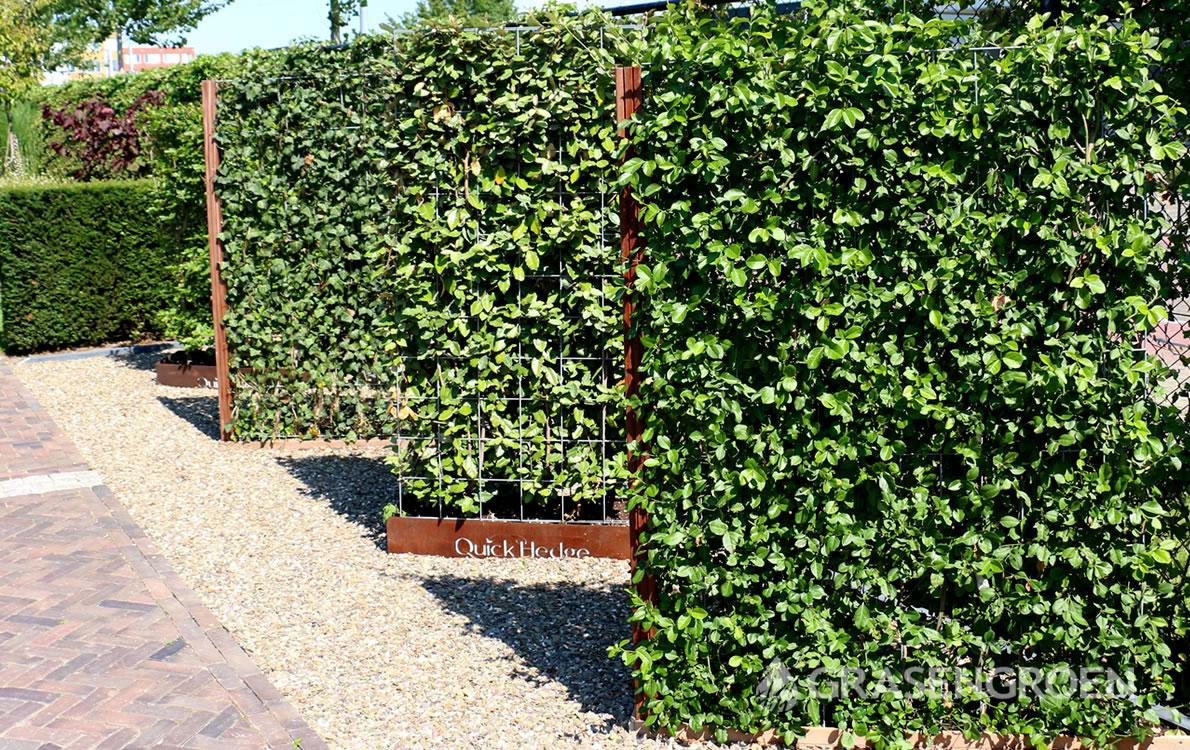 Hagen3 • Gras en Groen Winkel