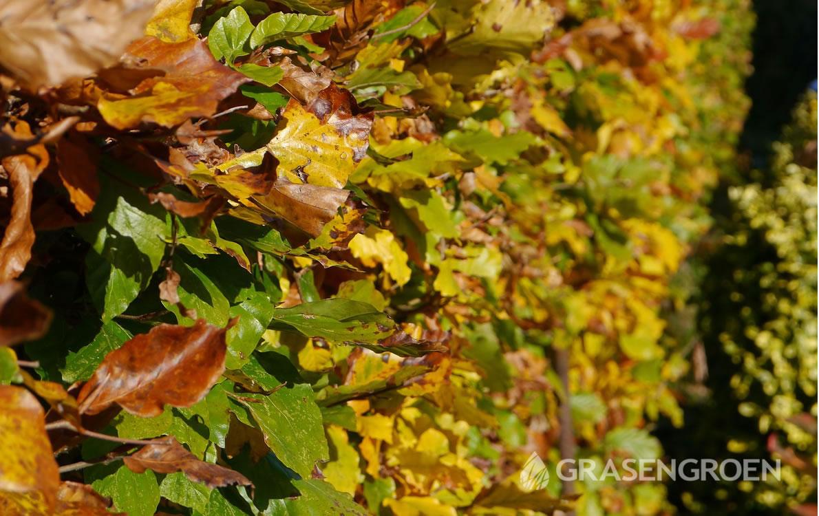 Hagen1 • Gras en Groen Winkel
