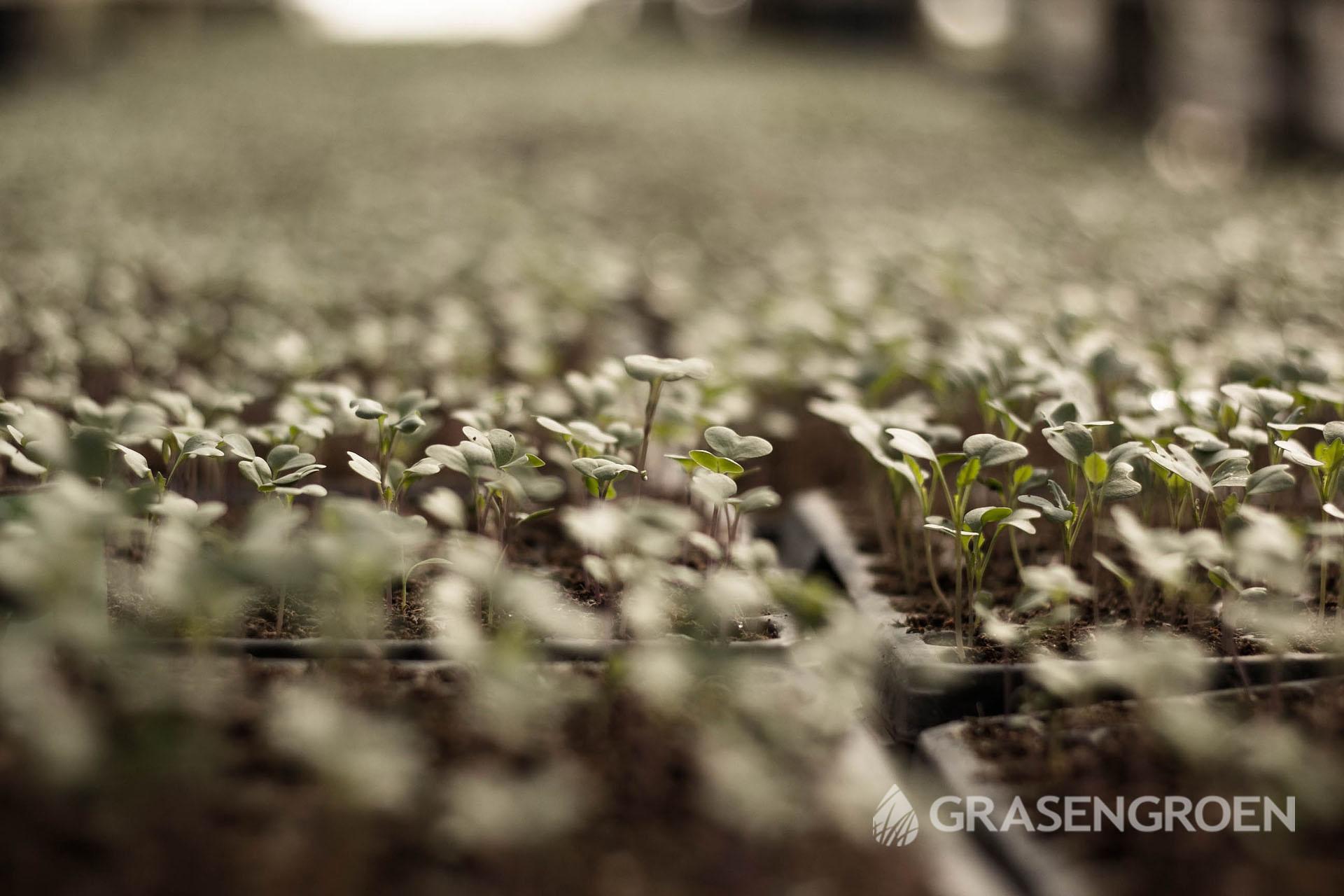Moestuin2 • Gras en Groen Winkel