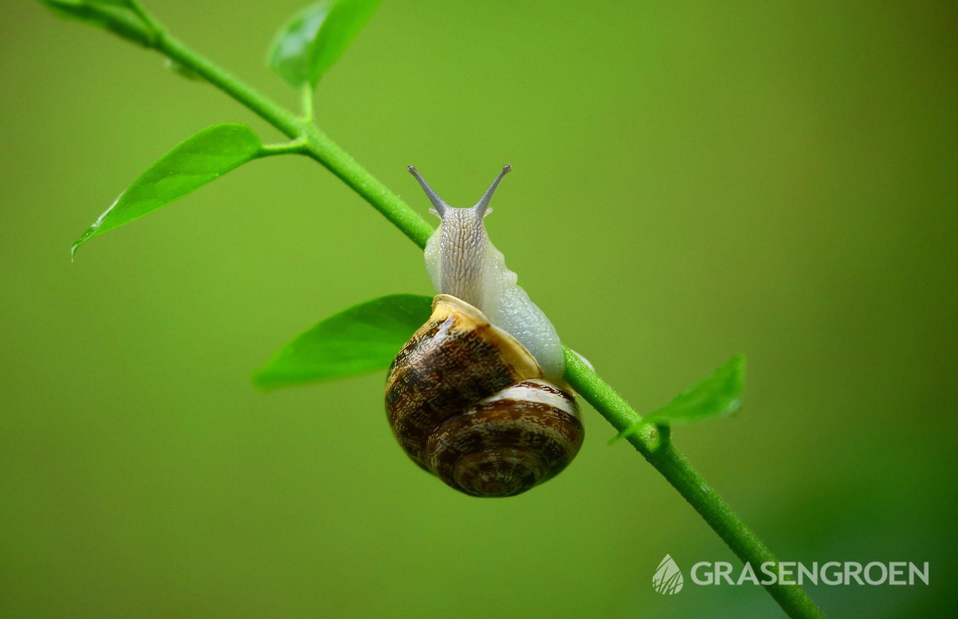 Slakken • Gras en Groen Winkel