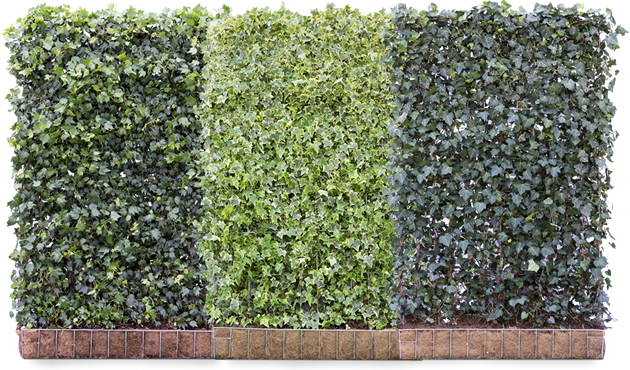 Aanbiedinghagen • Gras en Groen Winkel