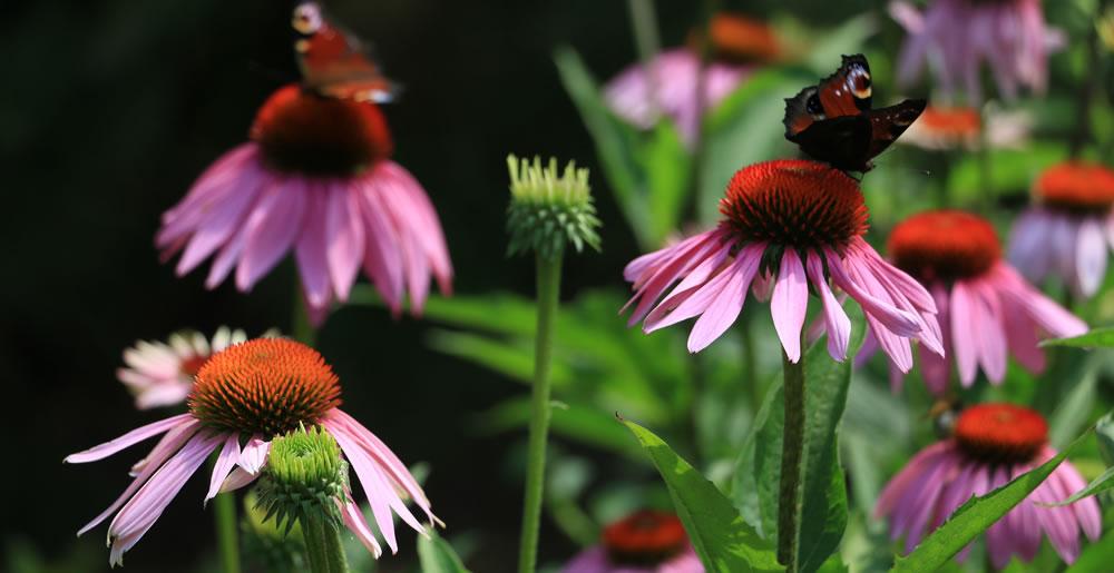 Plantverzorging • Gras en Groen Winkel