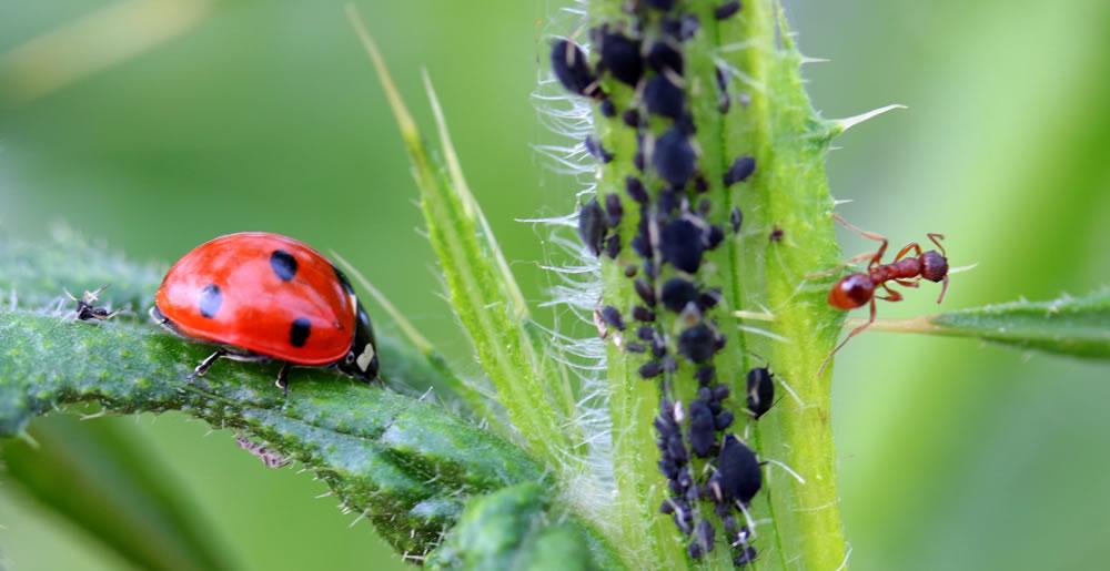 Ziektenplagen • Gras en Groen Winkel