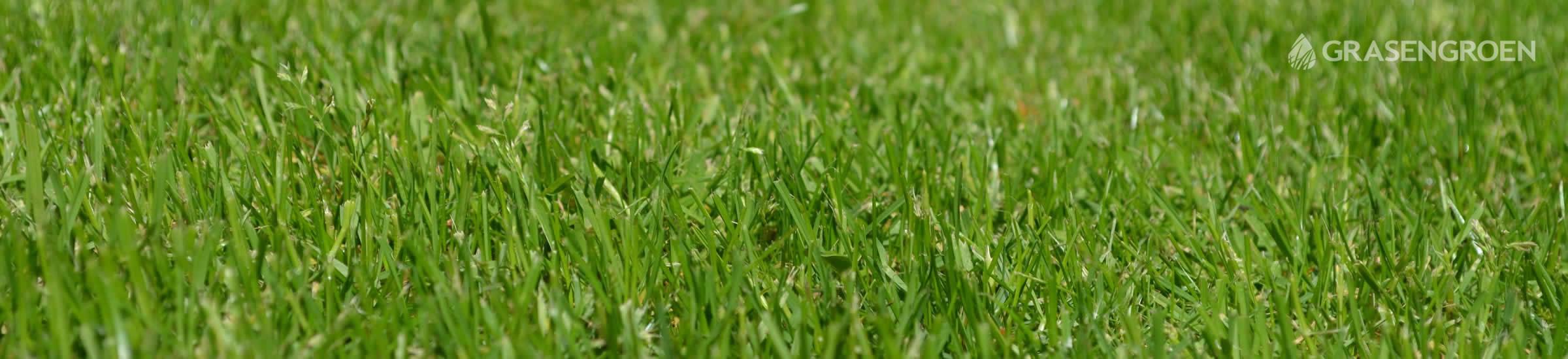Herstelgazonvoorjaar • Gras en Groen Winkel