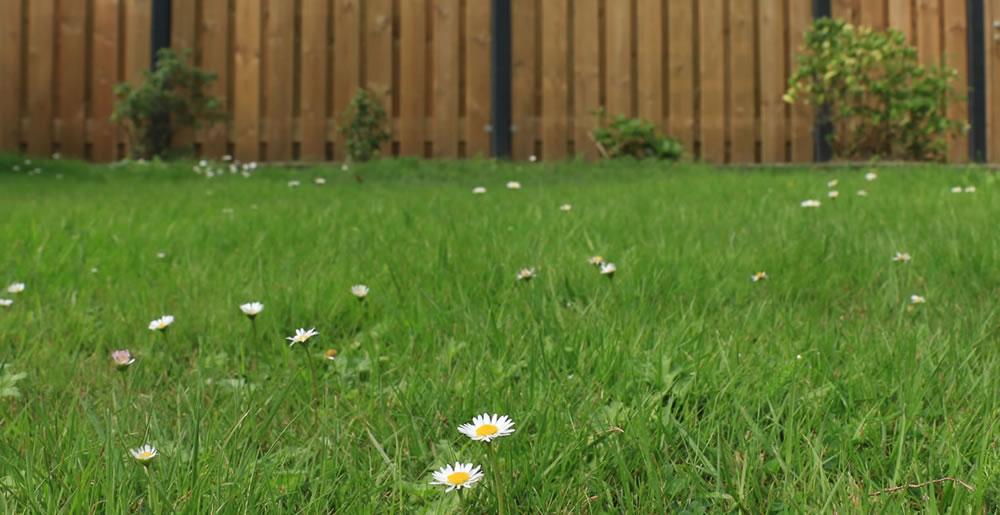 Gazononkruid • Gras en Groen Winkel