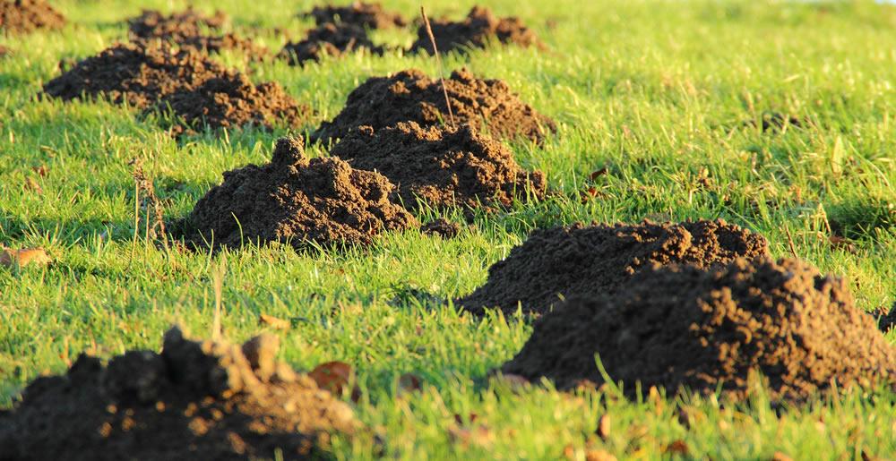 Mollen • Gras en Groen Winkel