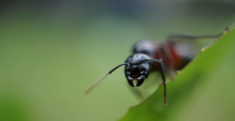 Mieren • Gras en Groen Winkel