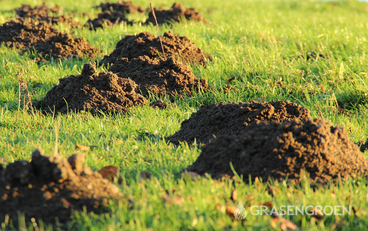Mollentuin5 • Gras en Groen Winkel